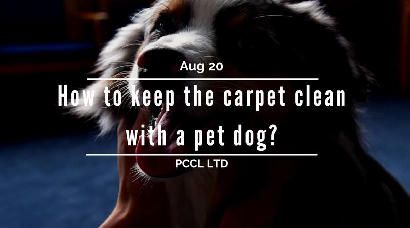 Carpet Cleaning With A Dog