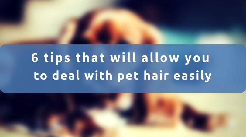 6 Tips That Will Allow You To Deal With Pet Hair Easily